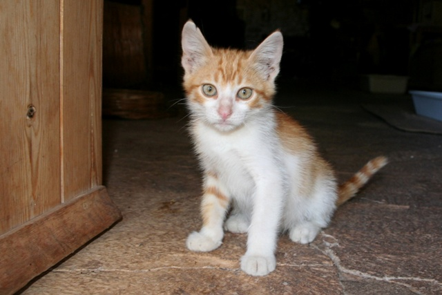 Pumpkin was rescued from the new town area