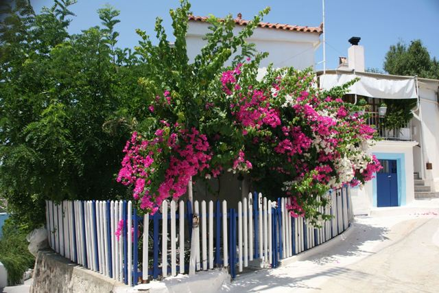 Poros Island - Colourful homes and gardens near the clock-tower