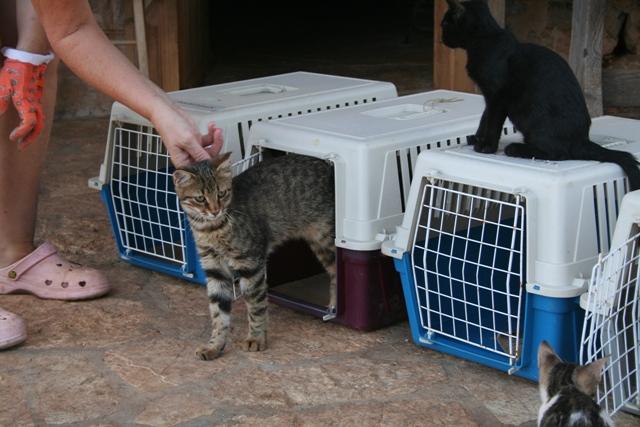 GreekSTRAYS - Cat neutering