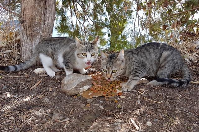 GreekSTRAYS - Tia & Maria left on their own - October 2017