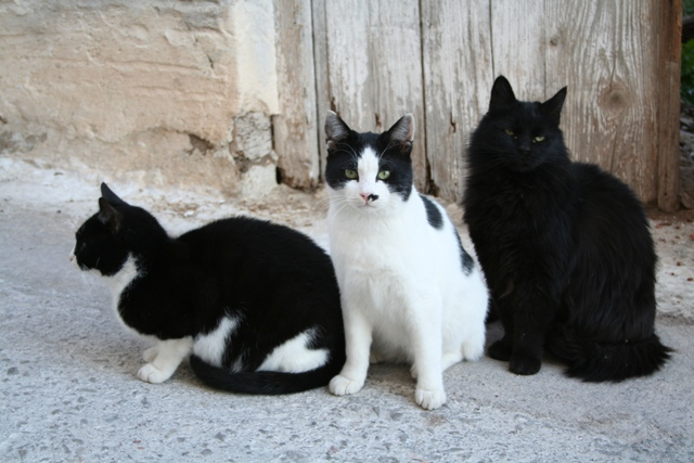 GreekSTRAYS - Animal Welfare in Ermioni