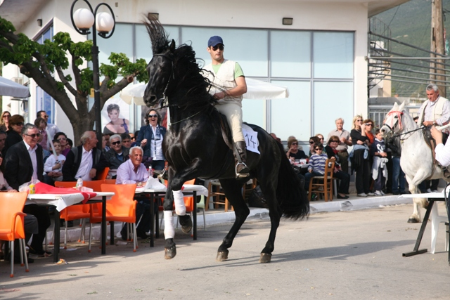 Didyma 'Tulips' festival - The stallion star attraction