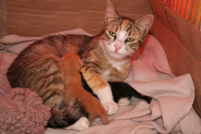 GreekSTRAYS - Dina and her Babies - May 2014