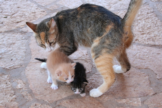 GreekSTRAYS - Dina and her Babies - June 2014