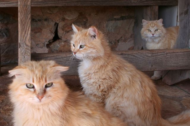 GreekSTRAYS - Cereal Sisters - March 2012