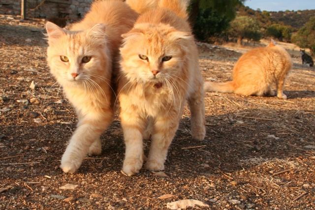 GreekSTRAYS - Cereal Sisters - September 2012