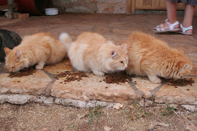 GreekSTRAYS - Cereal Sisters - October 2012