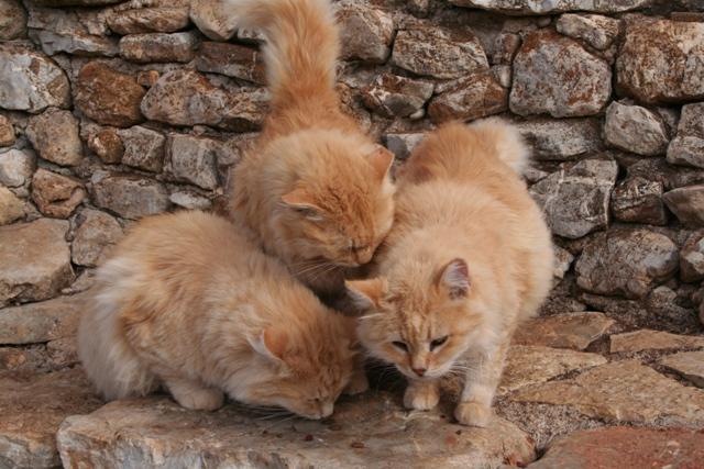 GreekSTRAYS - Cereal Sisters - November 2012