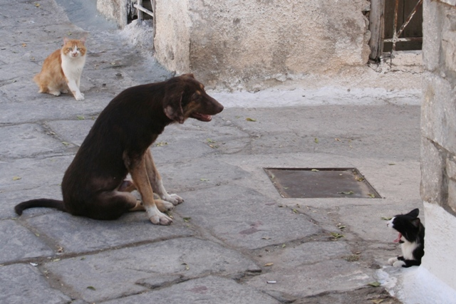 Scooby soon made friends with the local cats